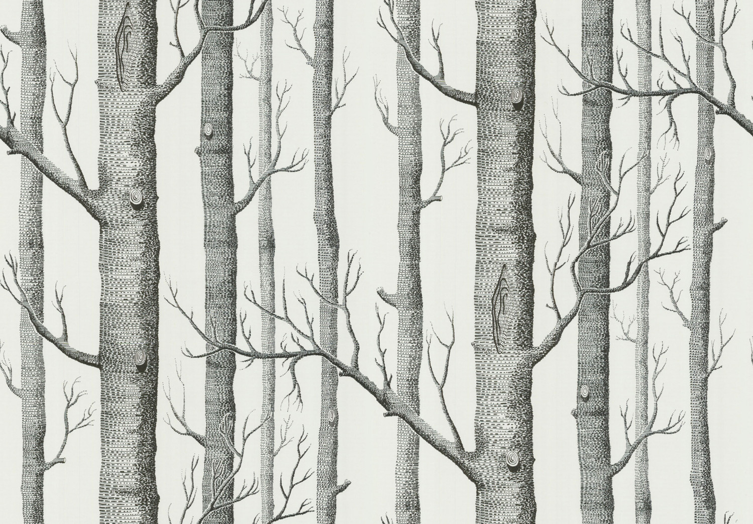 Cole And Son Woods cole & son - new contemporary ii - woods 69/12147