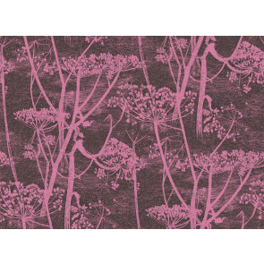 Cole & Son - New Contemporary I - Cow Parsley 66/7047