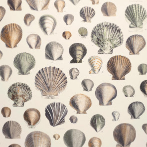 John Derian - Captain Thomas Browns Shells - FJD6003/02 Oyster