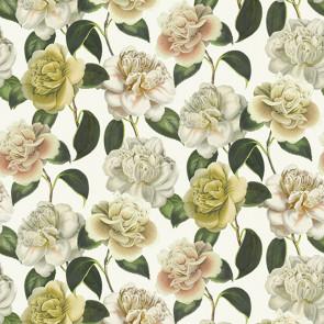John Derian - Camellia Folly - FJD6020/02 Parchment