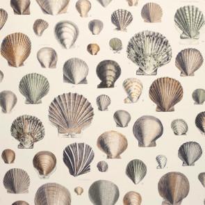 John Derian - Captain Thomas Browns Shells - PJD6000/02 Oyster