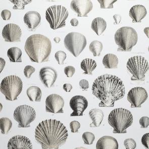 John Derian - Captain Thomas Browns Shells - PJD6000/03 Pearl