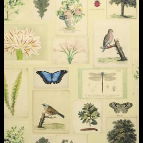 John Derian - Flora and Fauna - PJD6001/01 Parchment