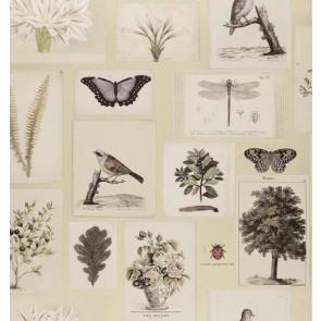 John Derian - Flora and Fauna - PJD6001/03 Canvas